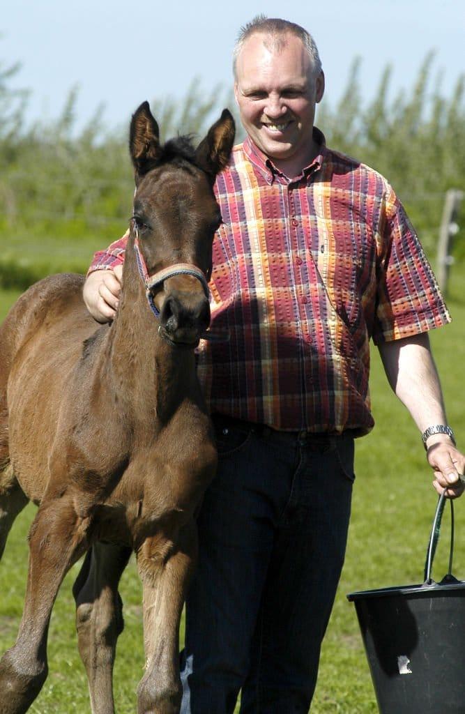Holsteiner Pferdezucht von Harald Andresen aus Behrendorf